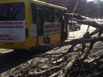 В Одессе дерево упало на маршрутку (видео)