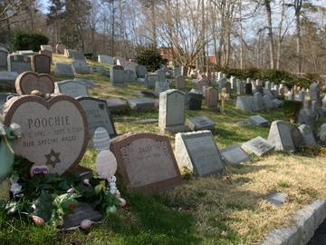 В Одессе построят кладбище для домашних животных