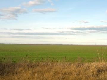 Погода в Одессе - весна в январе