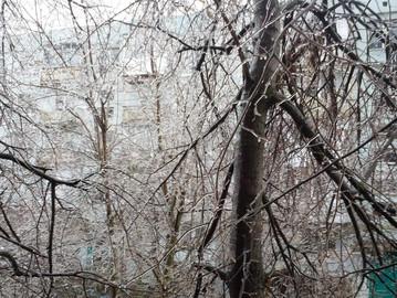 В Одессе наступила зимняя погода, мокрый снег угрожает обвалом веток