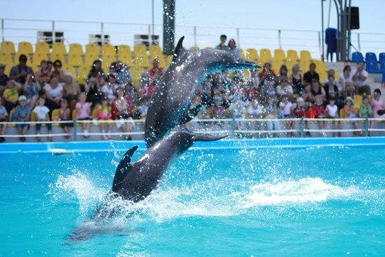 Шоу в Дельфинарии Немо
