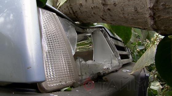 В Одессе упавший тополь повредил 2 машины