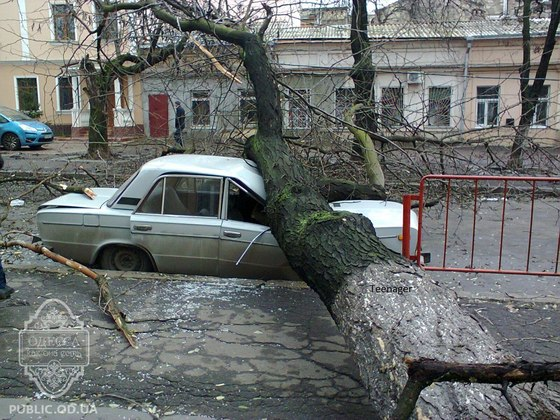 Дерево упало у 50 школы на Жигули. Кроме авто, никто не пострадал