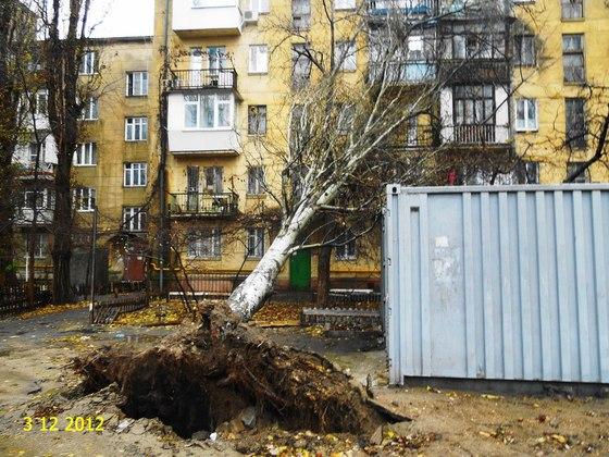 Ураган в Одессе вырывал деревья прямо с корнем