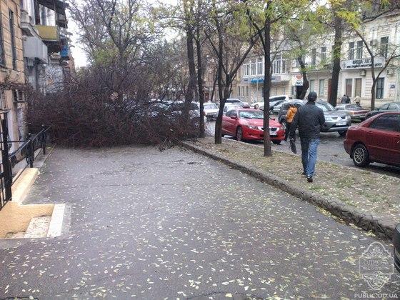Ураган в Одессе повалил деревья и обесточил несколько районов (фото + видео)