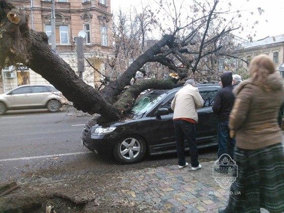 Деревья падают прямо на авто